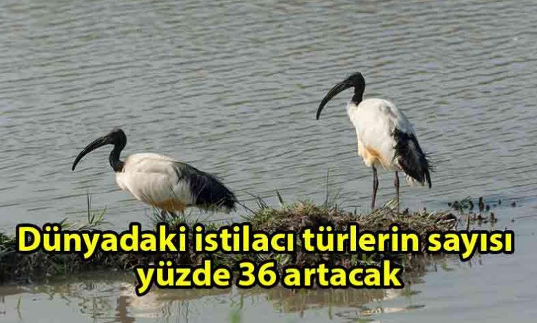 ozgur_gazete_kibris_2050_yılına_kadar_dünyadaki_istilacı_türlerin_sayısı-yüzde_36_artacak