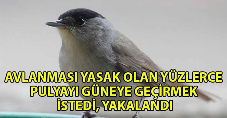 ozgur_gazete_kibris_Yuzlerce_Pulya_ile_yakalandi