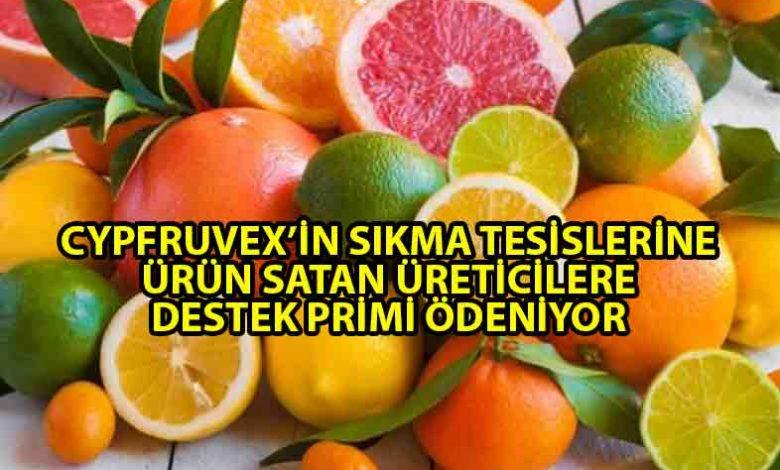ozgur_gazete_kibris_narenciye