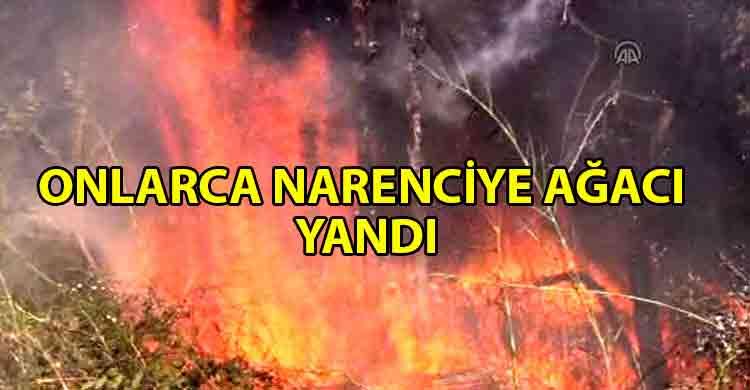 ozgur_gazete_kibris_narenciye_bahçesinde_yangın_çıktı