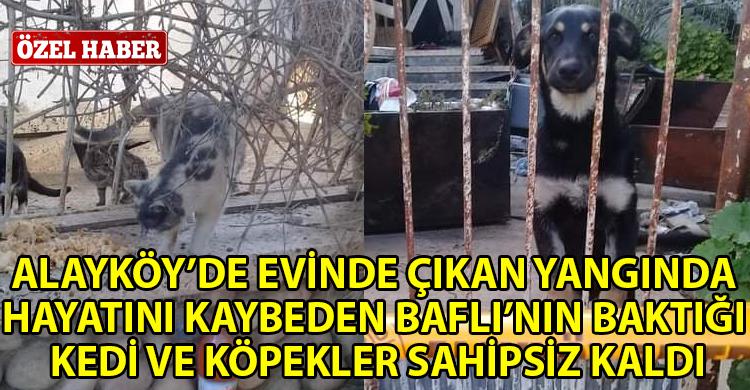 ozgur_gazete_kibris_Annelerini_kaybettiler_yeni_yuvalarini_ariyorlar