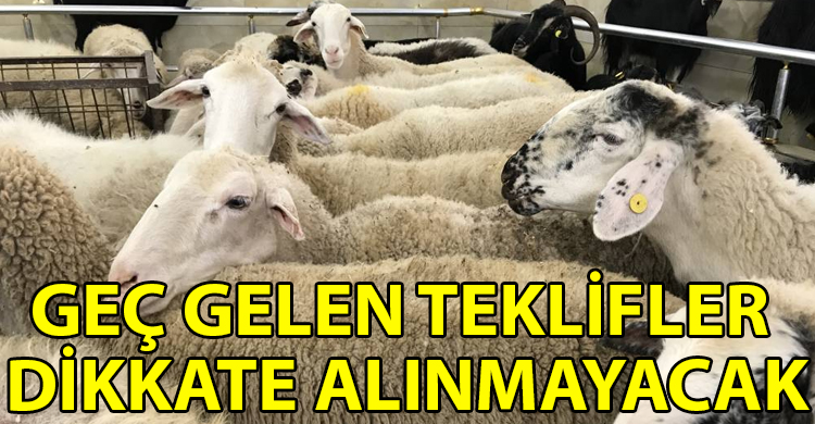 ozgur_gazete_kibris_Devlet_Uretme_Ciftlikleri_nden_kasaplik_hayvan_satisi