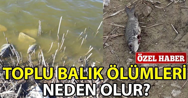 ozgur_gazete_kibris_Gonyeli_Goleti_nde_toplu_balik_olumu