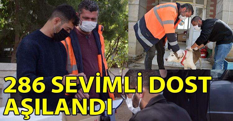 ozgur_gazete_kibris_Lefkosa_Hayvan_Barinagi_ndaki_sevimli_dostlarin_asilari_yapildi