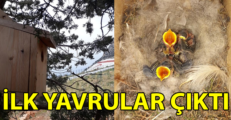 ozgur_gazete_kibris_ilk_yavrular_cikti