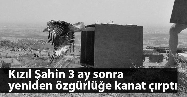 ozgur_gazete_kibris_kızılsahin_özgürlük