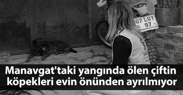 ozgur_gazete_kibris_manavgat_yangin_kopek