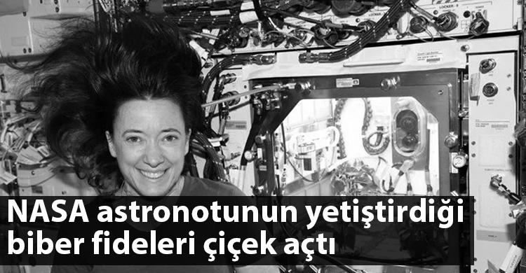 ozgur_gazete_kibris_nasa