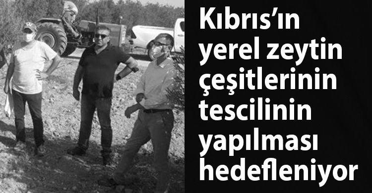 ozgur_gazete_kibris_yerel_zeytin_tescil